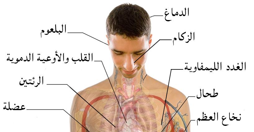 صورة شاب يتصالح مع الإنفلونزا ويتقبلها كجزء لا يتجزأ من جسمه