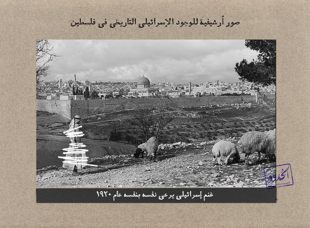غنم إسرائيلي يرعى نفسه بنفسه عام 1920